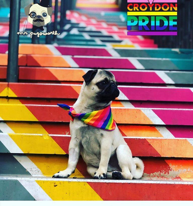 CRoydon Pride - pug on Surrey Street steps